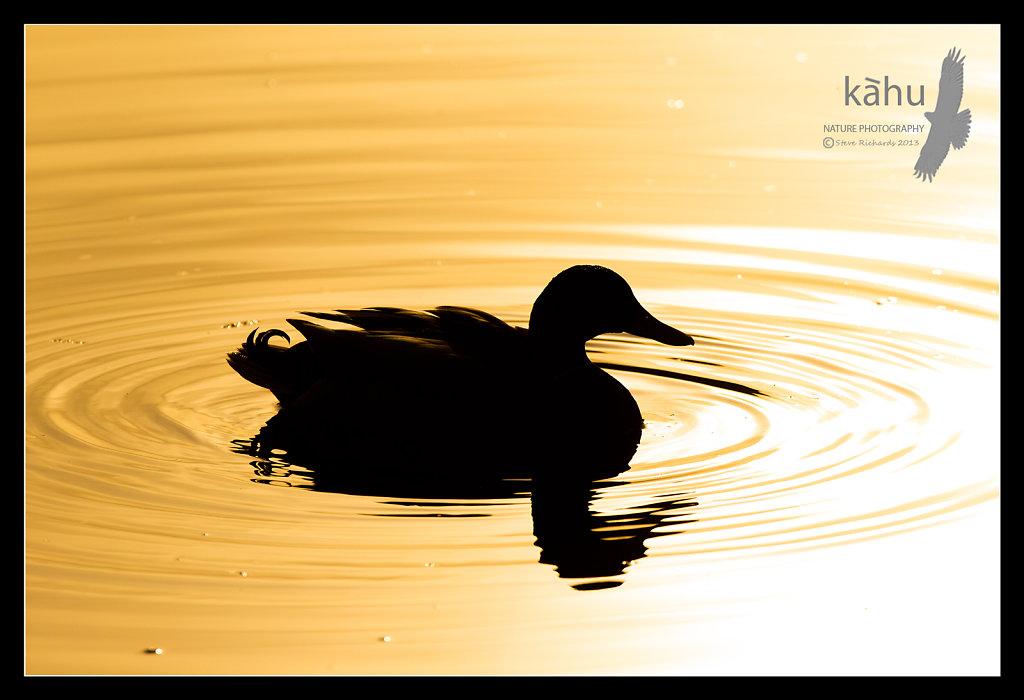 Mallard silhouette   SL14