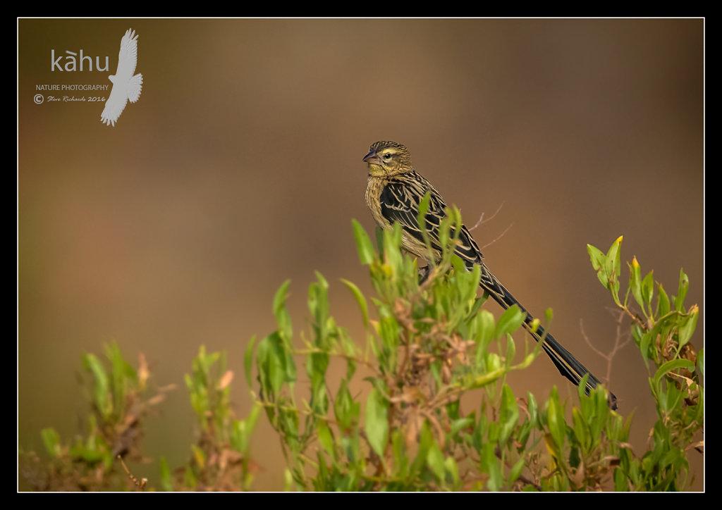 Bird16.jpg