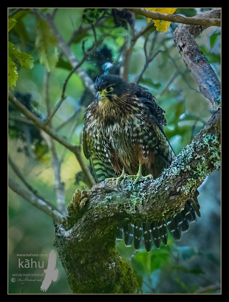 Female looking a bit damp after a bath